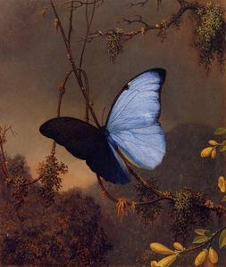 Martin Johnson Heade - 蓝蝶蝶