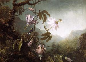 Martin Johnson Heade - 蜂鸟栖息附近激情花