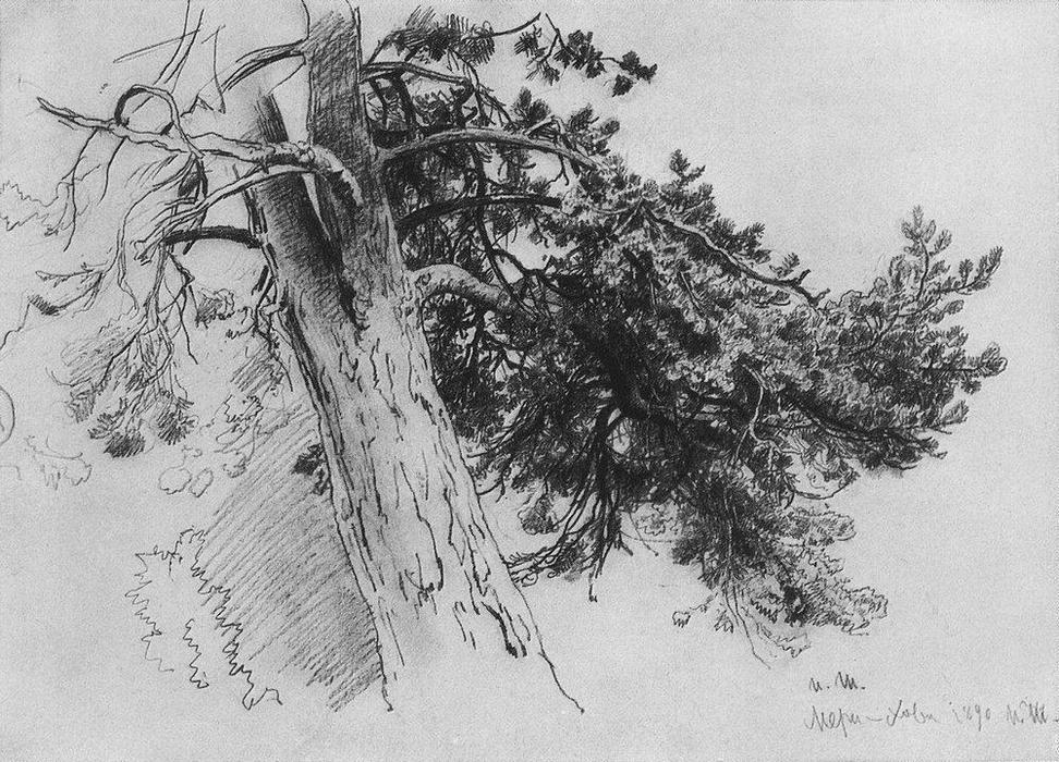 """""""部分松树的树干."""
