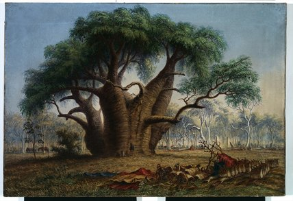 痛风干树,Adansonia Gregorii 通过 Thomas Baines (1820-1875, United Kingdom)