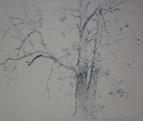 手绘可爱梧桐树
