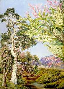 Marianne North - 伊拉瓦拉 新  南  威尔士