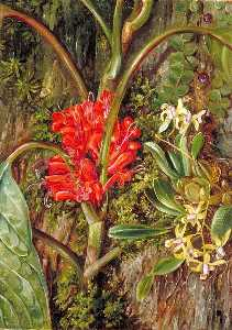 Marianne North - Java的 花儿