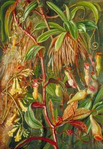 Marianne North - 塞舌尔 投手 厂 和bilimb marron