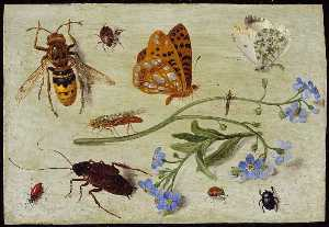 Jan Van Kessel The Elder - 昆虫